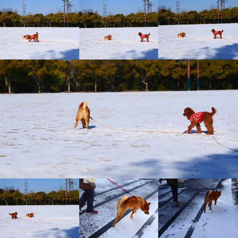 玄武初めての大雪6