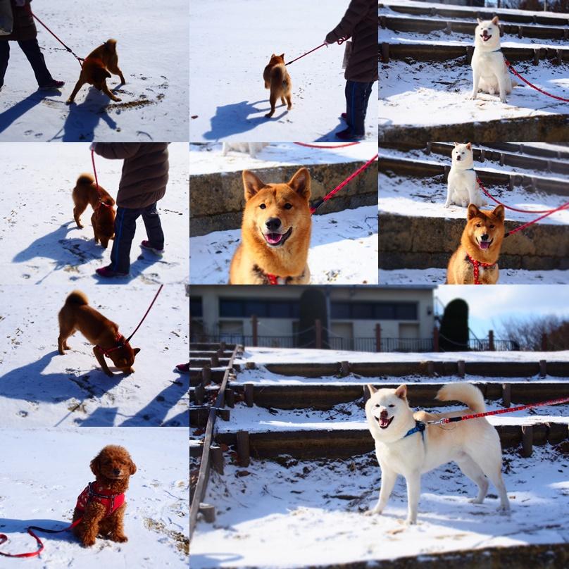 玄武初めての大雪7