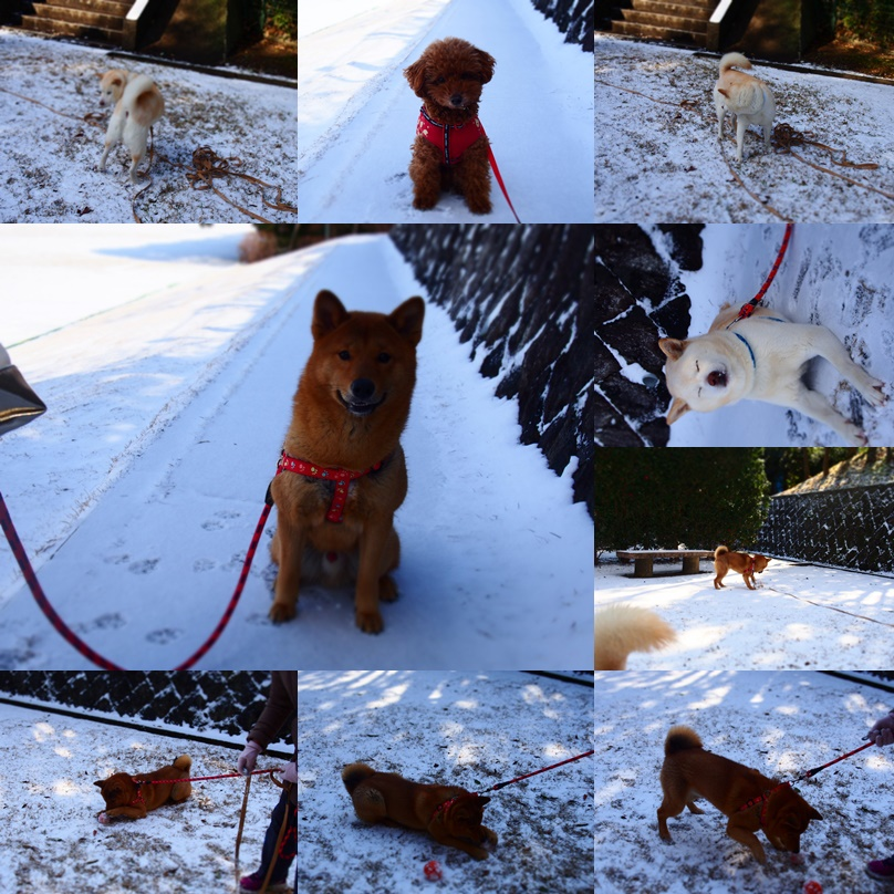 玄武初めての大雪8