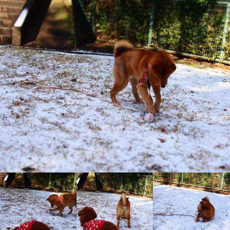 玄武初めての大雪9