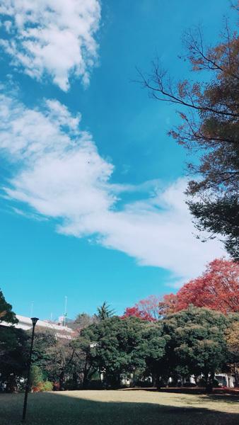 きれいな秋晴れの空