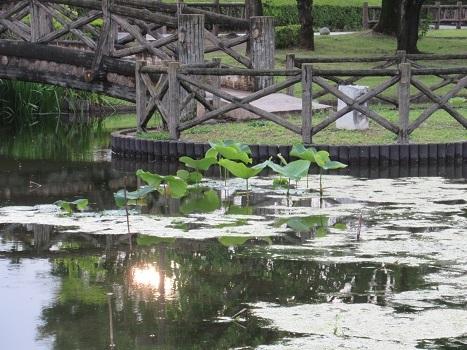 IMG_6776.jpg