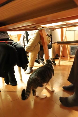 テーブルの下