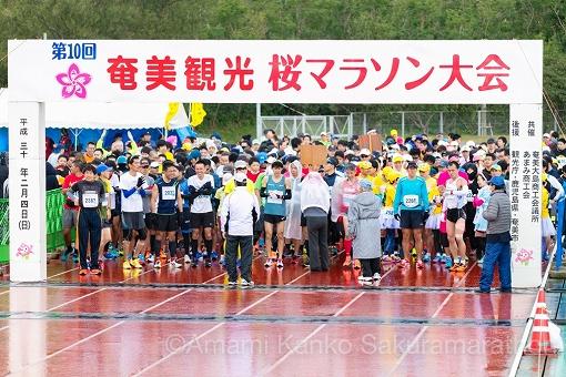 sakura-start-half-001.jpg