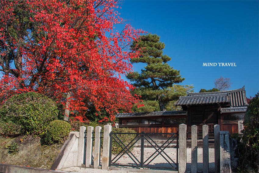 後白河天皇陵 桜紅葉