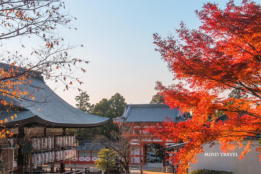 新日吉神社 紅葉