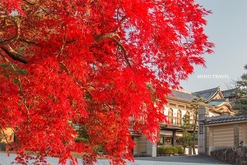 妙法院 紅葉