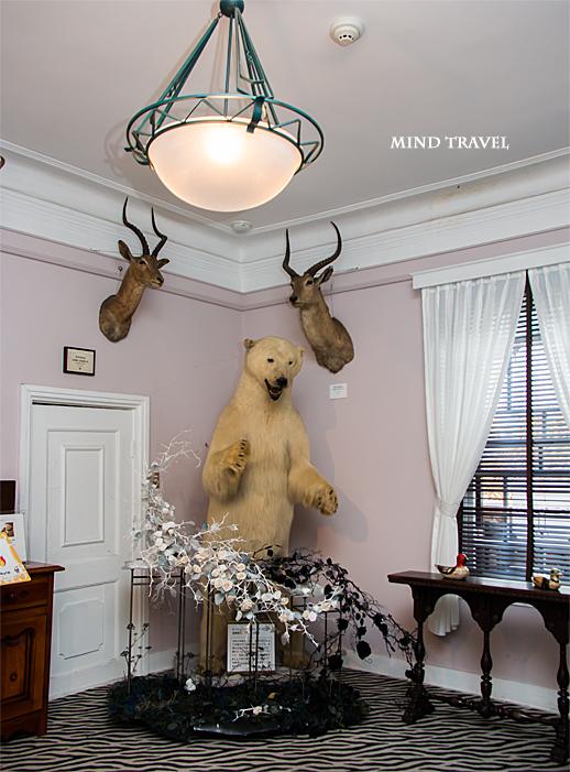 ベンの家 北極熊