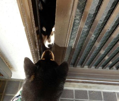 おかえり 玄関