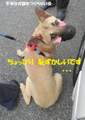 げんちゃん (3)