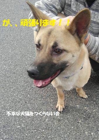 げんちゃん (4)