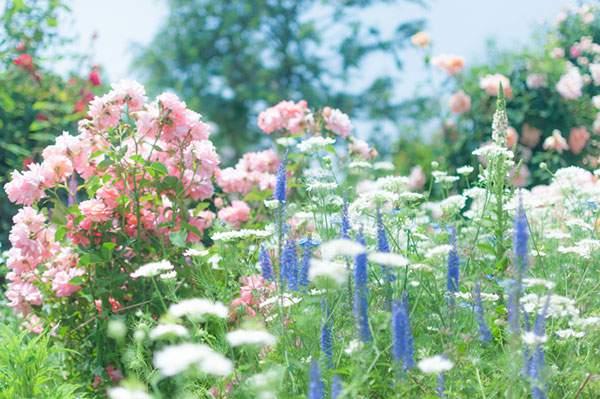 free-photo-rose-11.jpg
