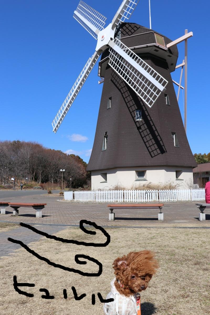 20180204花博記念公園8