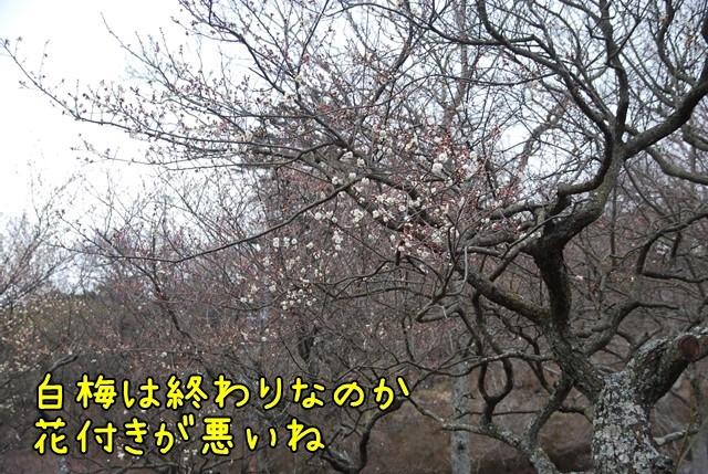 c-DSC_5508.jpg