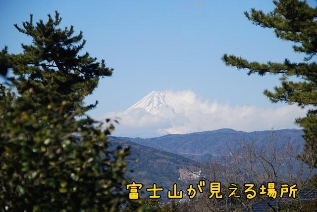 c-DSC_5531.jpg