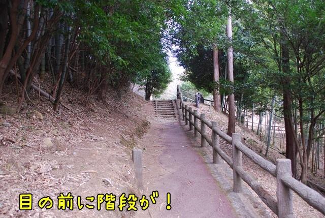 c-DSC_5567.jpg