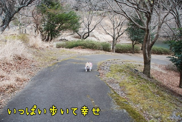 c-DSC_5569.jpg