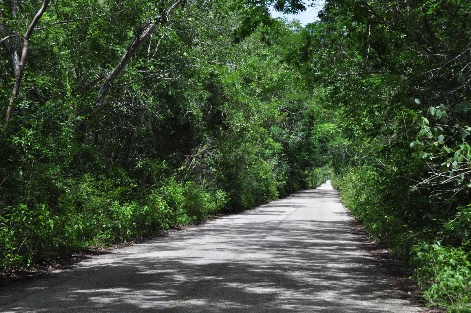 camino angosto