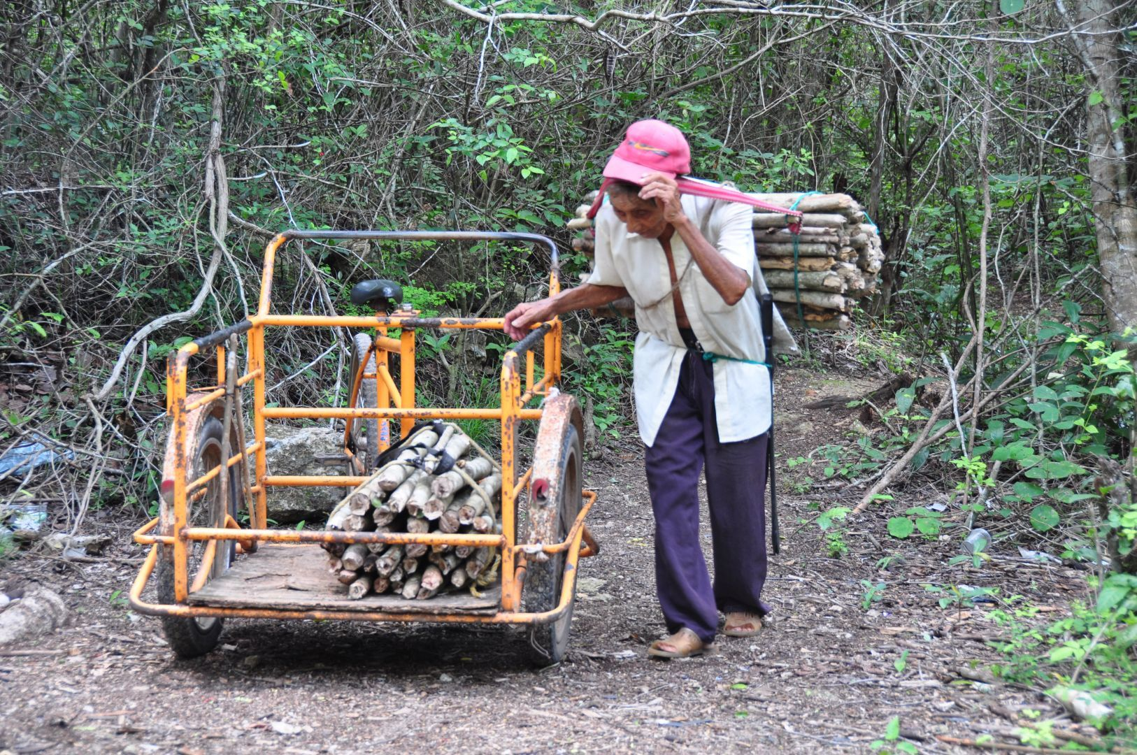 recogiendo maderas