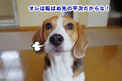 よぼよぼ 5