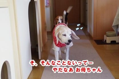よぼよぼ 2