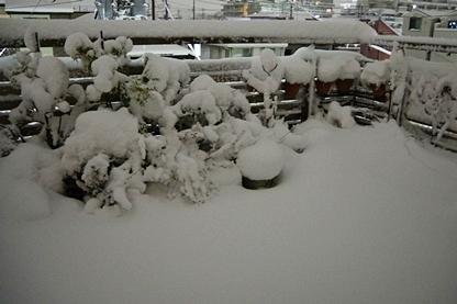 初雪 22