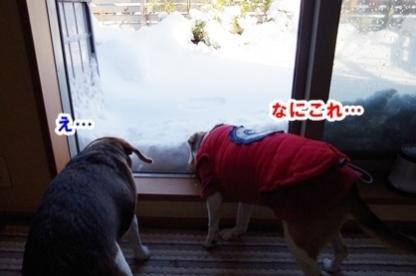 雪遊び 0
