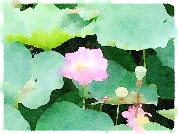 lotus001.jpg