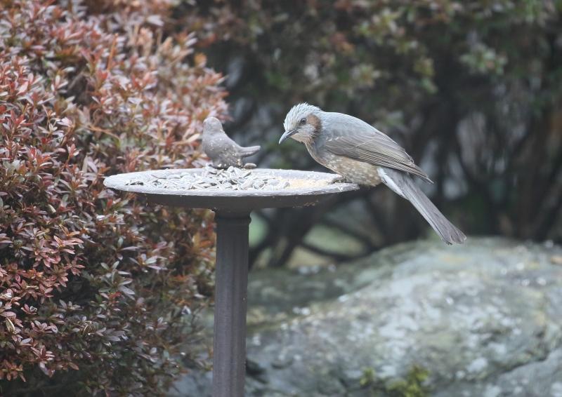 庭の小鳥⑥