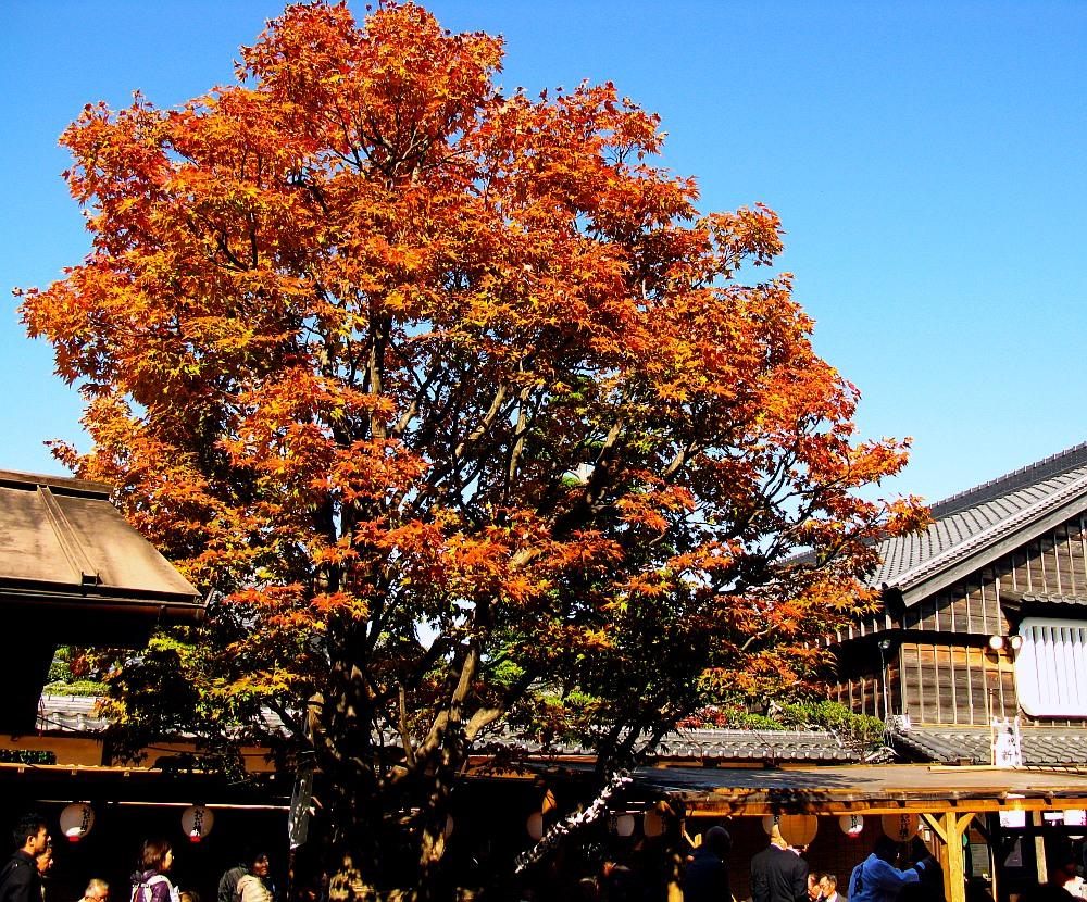 2013_11_29 伊勢神宮:おはらい町A05