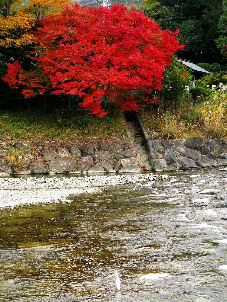 2013_11_29 伊勢神宮:おはらい町A58
