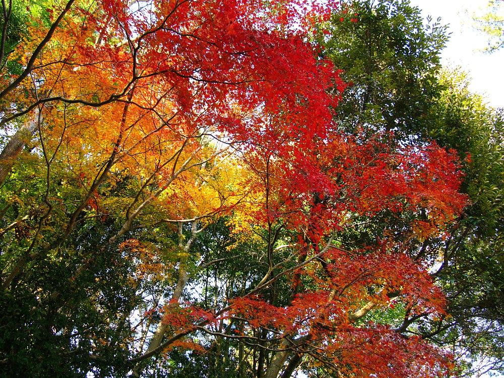 2013_11_29 伊勢神宮:内宮A27