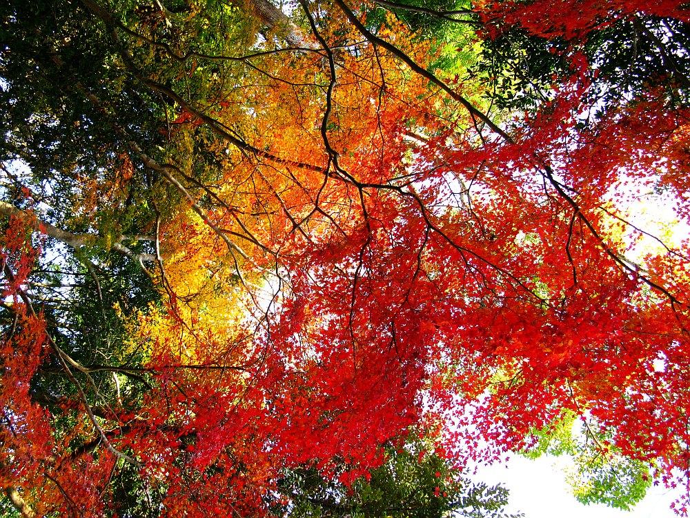 2013_11_29 伊勢神宮:内宮A28
