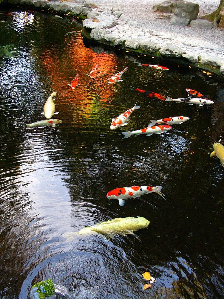 2013_11_29 伊勢神宮:内宮A38
