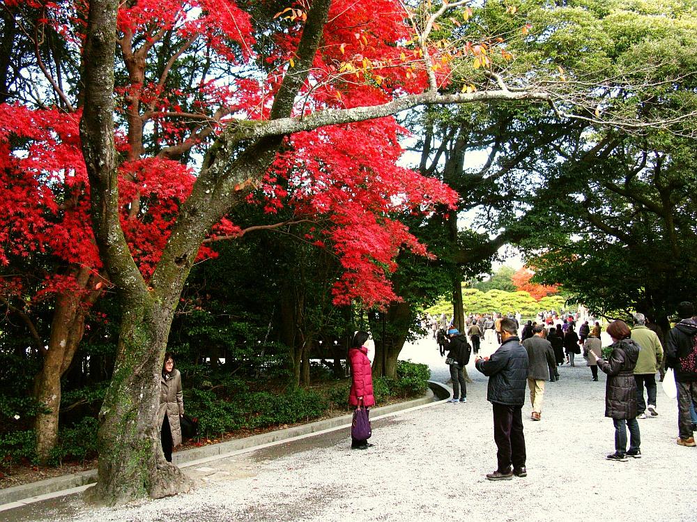 2013_11_29 伊勢神宮:内宮A42