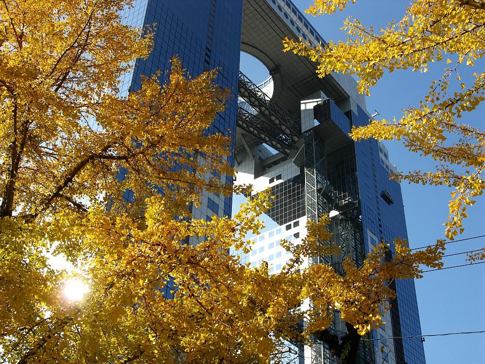 2013_11_21 梅田スカイビル 空中庭園展望台09