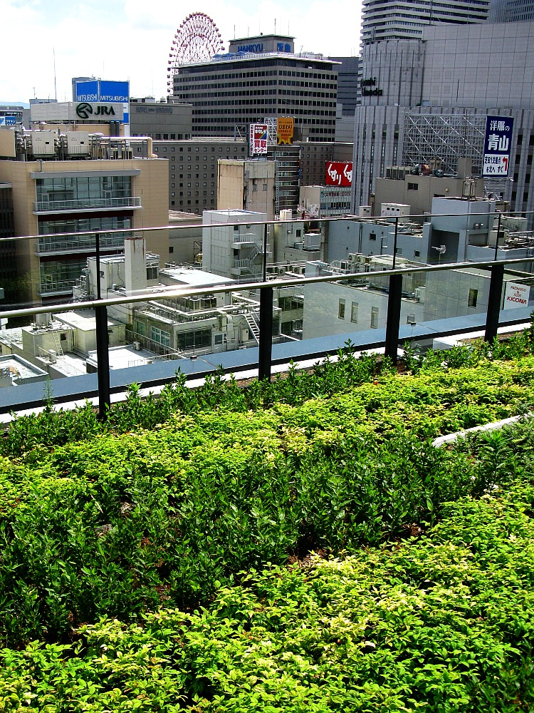 2013_09_05 GRAND FRONT OSAKA グランフロント大阪 屋上庭園03