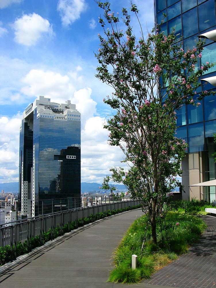 2013_09_05 GRAND FRONT OSAKA グランフロント大阪 屋上庭園06