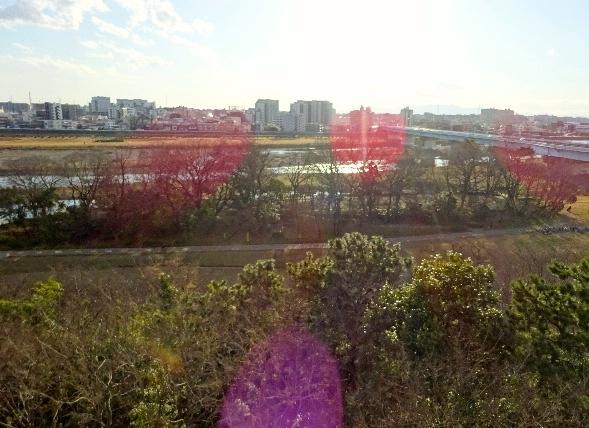 多摩川の景色