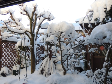 1大雪1月23日朝014
