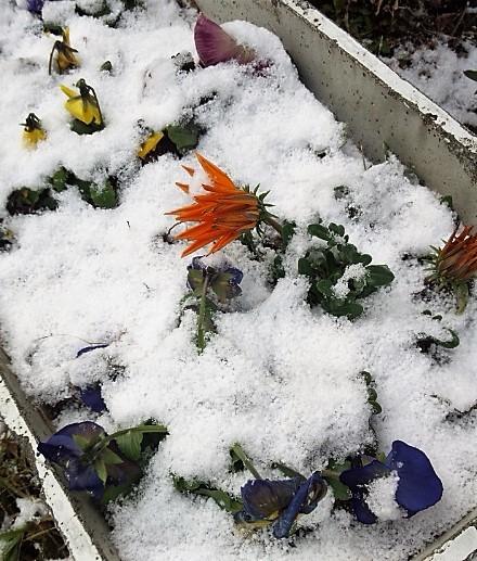 雪積もった2