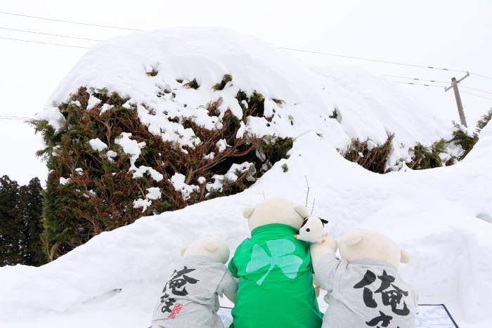 くま、雪を見上げる