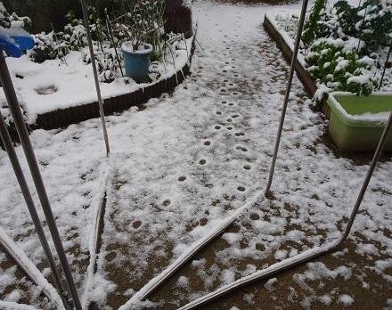 10雪の朝20180212