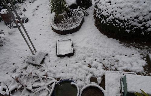 12雪の朝20180212