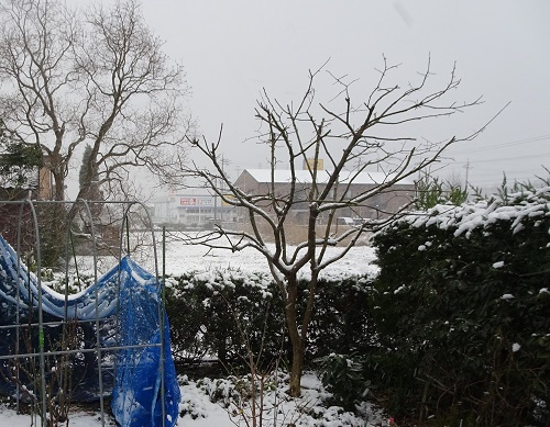 20雪の朝20180212