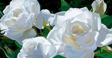 White-Roses-flowers-25785316-600-375.jpg