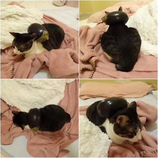 cats_20150719200938923_20171211214253365.jpg