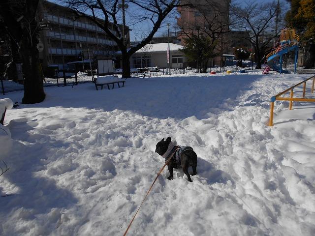 180122~23大雪⑦