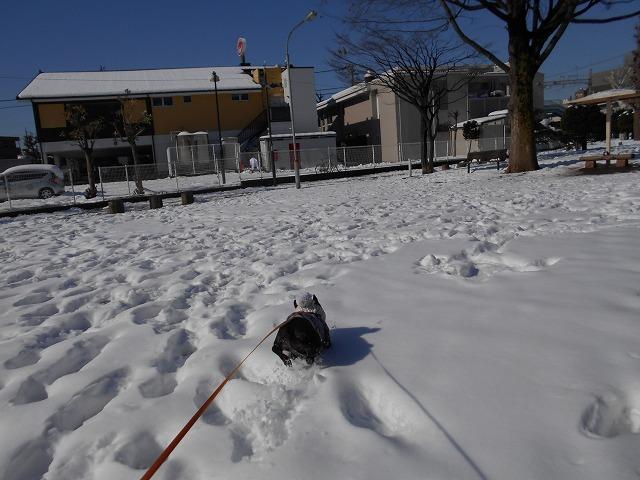 180122~23大雪⑪
