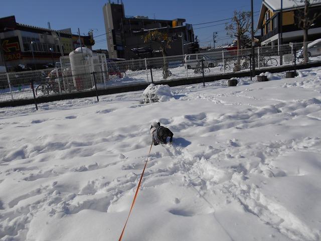 180122~23大雪⑫